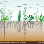 Aumento de la materia orgánica y la biología en los sistemas pastorales - Pastizales varios