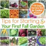Consejos para comenzar su primer jardín de otoño y 19 cultivos que pueden soportar