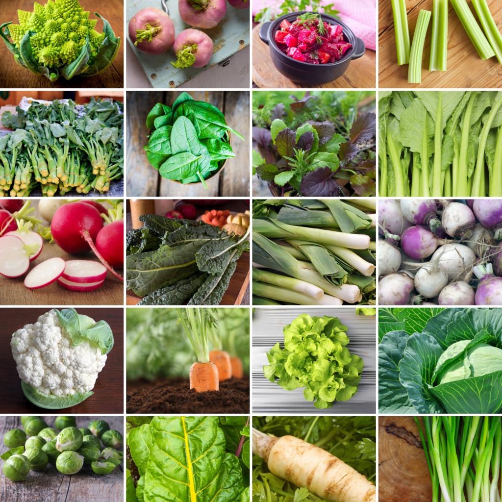 19 cultivos que deberías intentar cultivar este otoño o invierno