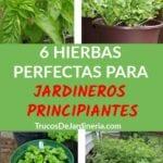 3 Hierbas Fáciles Cualquier Jardinero Principiante Puede Crecer