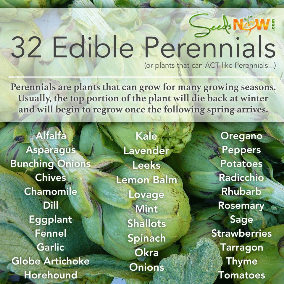 32 plantas perennes comestibles (¡o plantas que pueden ACTUAR como plantas perennes!)