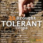 33 cultivos tolerantes a la sequía para climas secos o cálidos