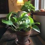 4 consejos para la jardinería de invierno en interiores