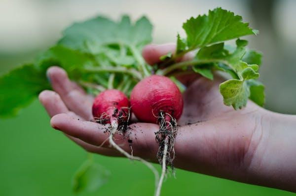 5 consejos para ayudar a que su jardín sobreviva sus vacaciones