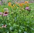 5 formas de utilizar y conservar las hierbas este verano