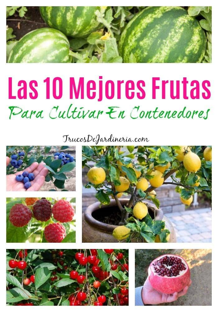 5 Mejores hortalizas y frutas para contenedores