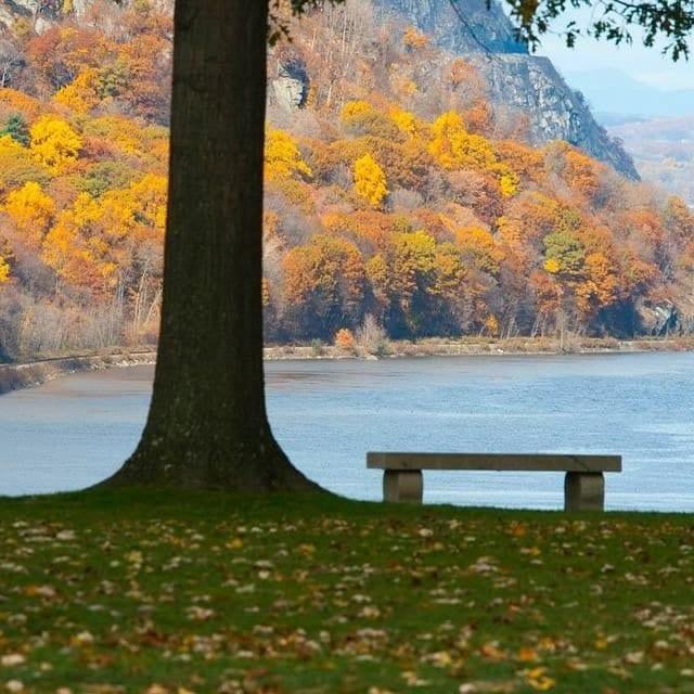 5 Pasos para un vibrante jardín de otoño