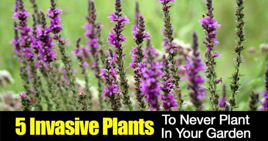 5-invasive-plants-01312016