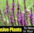 5 plantas invasoras que nunca debes plantar en tu jardín