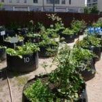 6 consejos para cultivar jardines en paisajes urbanos ⋆ Gran blog sobre jardinería