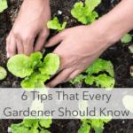 6 consejos que todo jardinero nuevo debe saber
