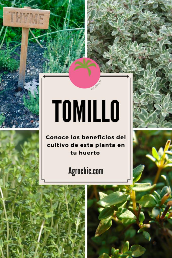 6 Razones para Grow Tomillo en el Jardín del Herb