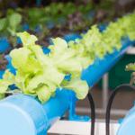 6 razones por las que deberías cambiarte a la hidroponía