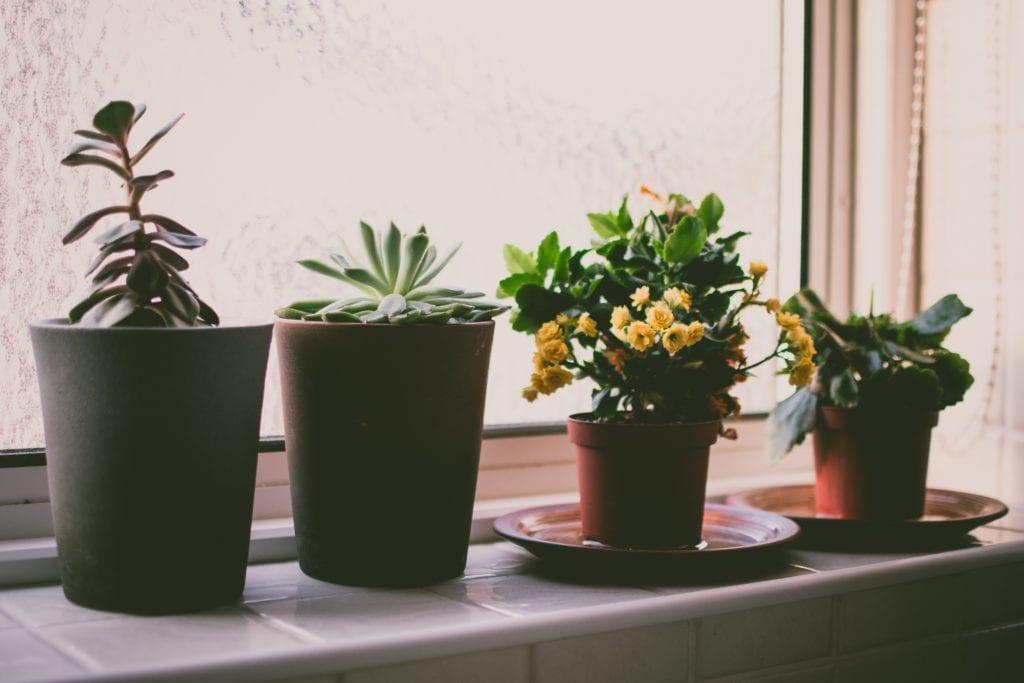 Plantas en una ventana