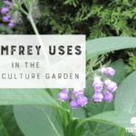 7 Usos comfrey en el jardín de la permacultura