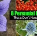 8 flores perennes que no necesitan dividirse -