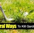 8 formas de matar las malas hierbas de forma natural [HOW TO]