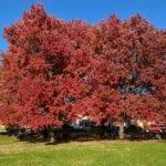 8 formas en que los árboles protegen su hogar ⋆ Great gardening blog
