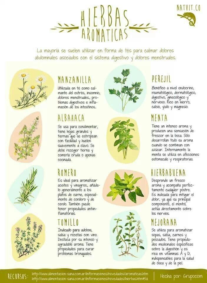 8 Hierbas para crecer en el jardín de la medicina