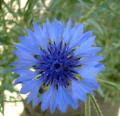 8 razones para cultivar flores comestibles