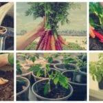 9 Enmiendas del suelo orgánico para las hortalizas en crecimiento