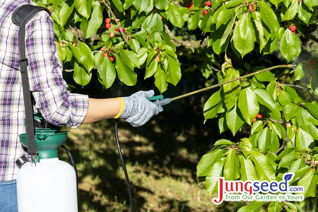 Rocíe los árboles frutales con pesticidas o insecticidas orgánicos