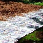 Acolchado de hojas (jardinería de lasaña) - ¿Daña el suelo?