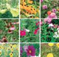 Actividades de primavera en el jardín para niños