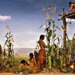 Agricultura de tres hermanas: un ejemplo de plantación complementaria