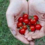 Ahorro de semillas para principiantes |  Intercambio de semillas de exposición al sur