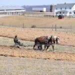 Amish Secrets of Agriculture and Gardening ⋆ Gran blog sobre jardinería