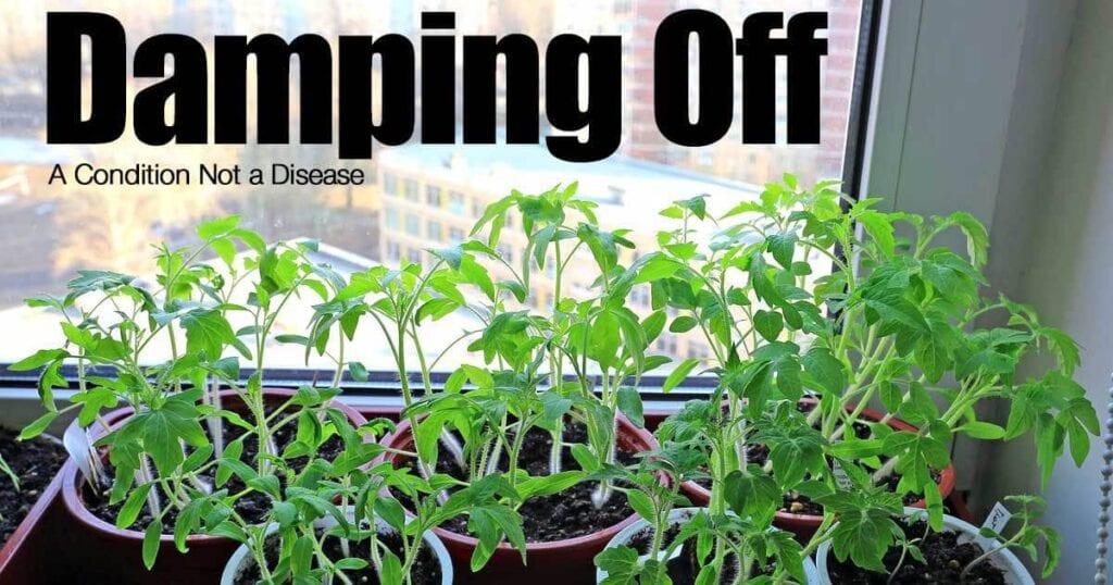 damping-off-09302015