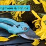 Anuncio del nuevo curso de poda - Mitos del jardín
