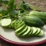 Atraer abejas a grandes pepinos, calabazas y melones