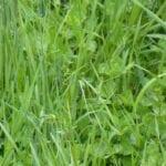 Aumento de la materia orgánica y la biología en los sistemas pastoriles: insumos biológicos específicos