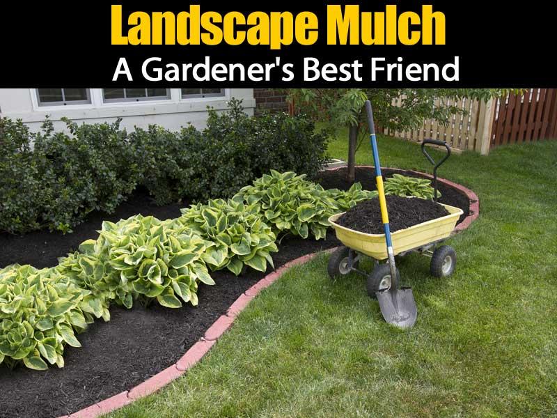 landscape-mulch-083114