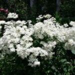 Fertilizante Bloom Booster