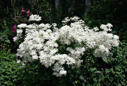 Bloom booster fertilizer - who needs it