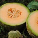 Combata el moho en su jardín: elija las variedades adecuadas