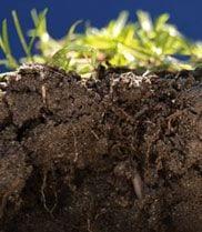 Cómo afectan los pesticidas a los microbios del suelo