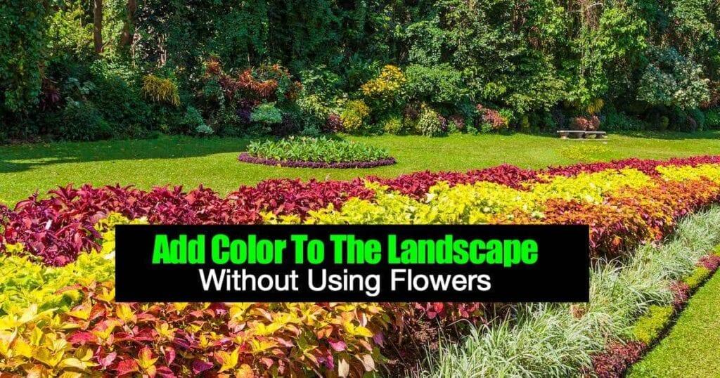 Cómo agregar color al paisaje sin usar flores -