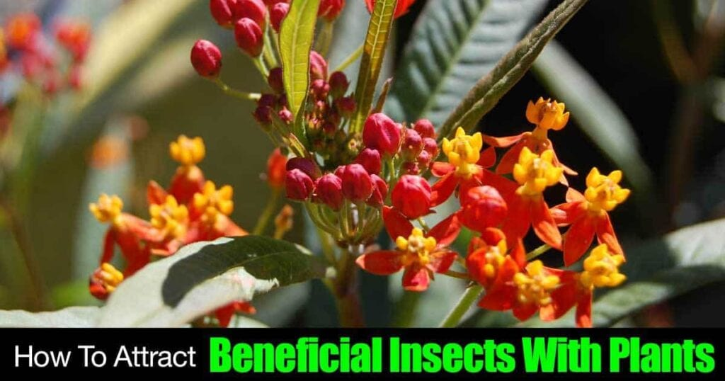 attract-beneficial-insects-05312016