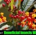 Cómo atraer insectos beneficiosos con plantas.
