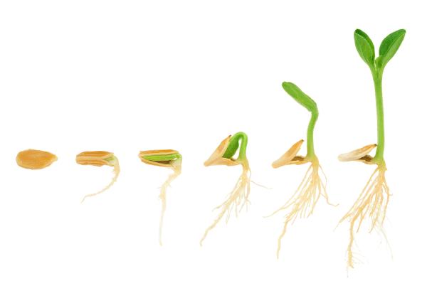 Cómo conseguir una mejor germinación de sus semillas
