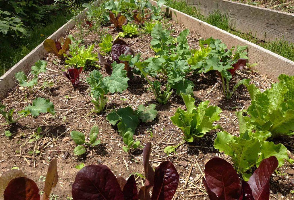 Cómo construir fácilmente una cama de jardín elevada ⋆ Great gardening blog