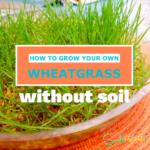 Cómo cultivar brotes en casa * sin tierra *