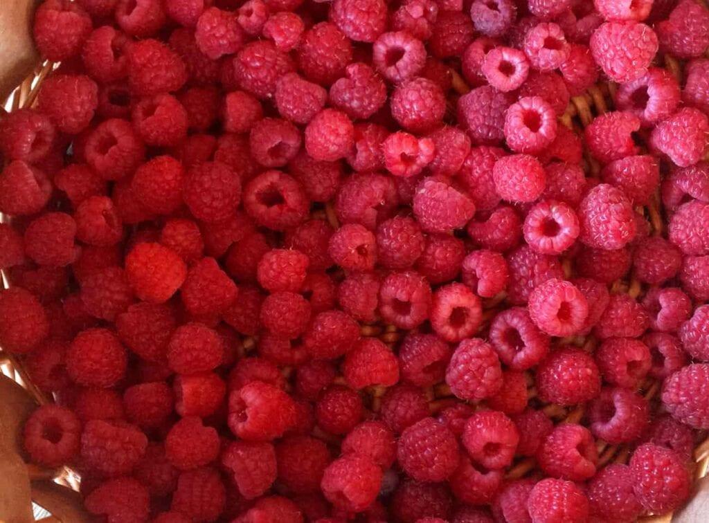 Cómo cultivar frambuesas ⋆ Gran blog de jardinería