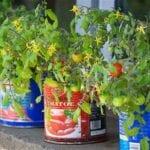 Cómo cultivar tomates y otras verduras en contenedores y macetas