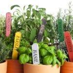 Cómo cultivar un jardín de hierbas de interior