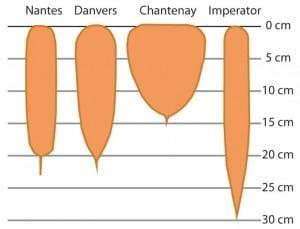 Gráfico de zanahoria